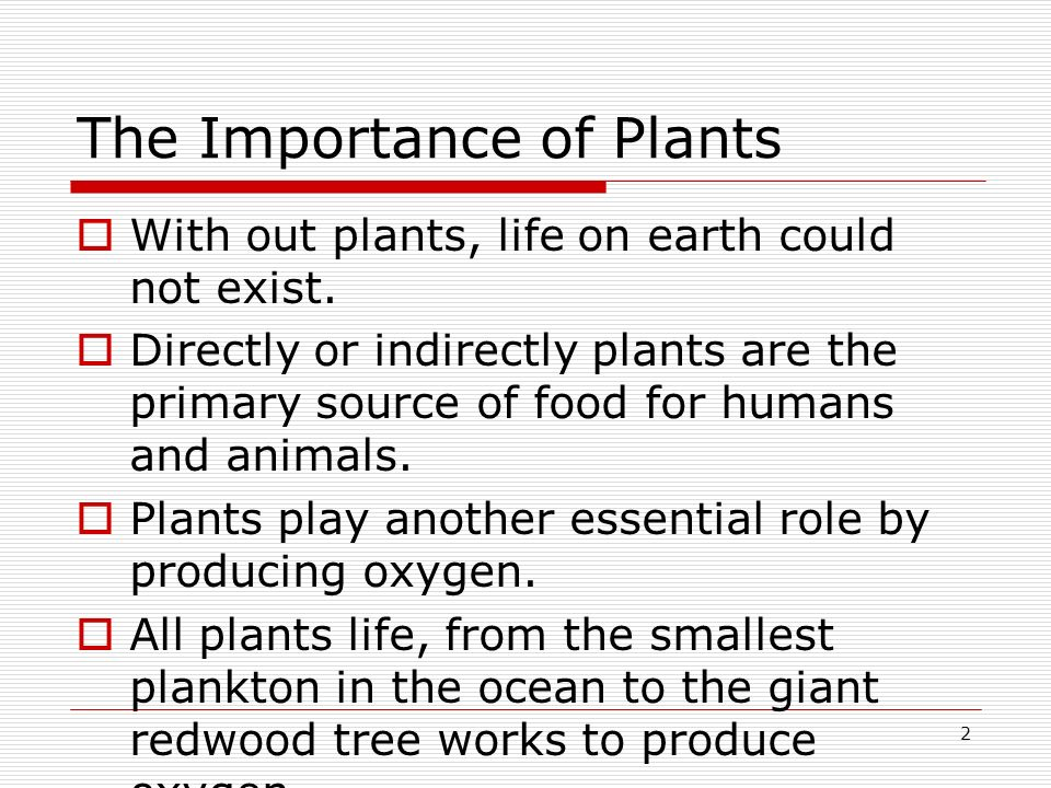 The Importance of Plants