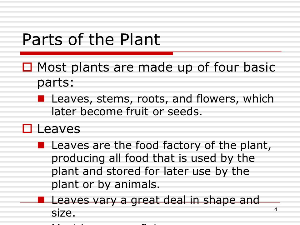 Parts of the Plant Most plants are made up of four basic parts: Leaves
