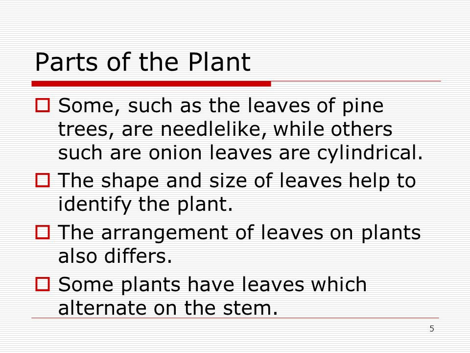 Parts of the Plant Some, such as the leaves of pine trees, are needlelike, while others such are onion leaves are cylindrical.