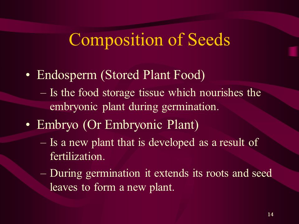 Composition of Seeds Endosperm (Stored Plant Food)