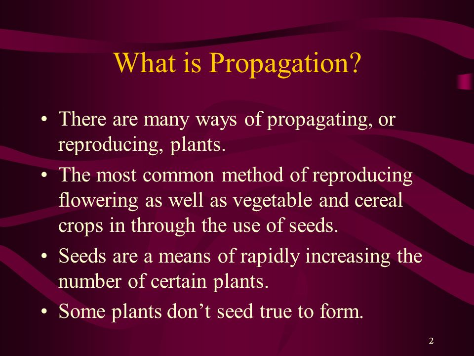 What is Propagation There are many ways of propagating, or reproducing, plants.