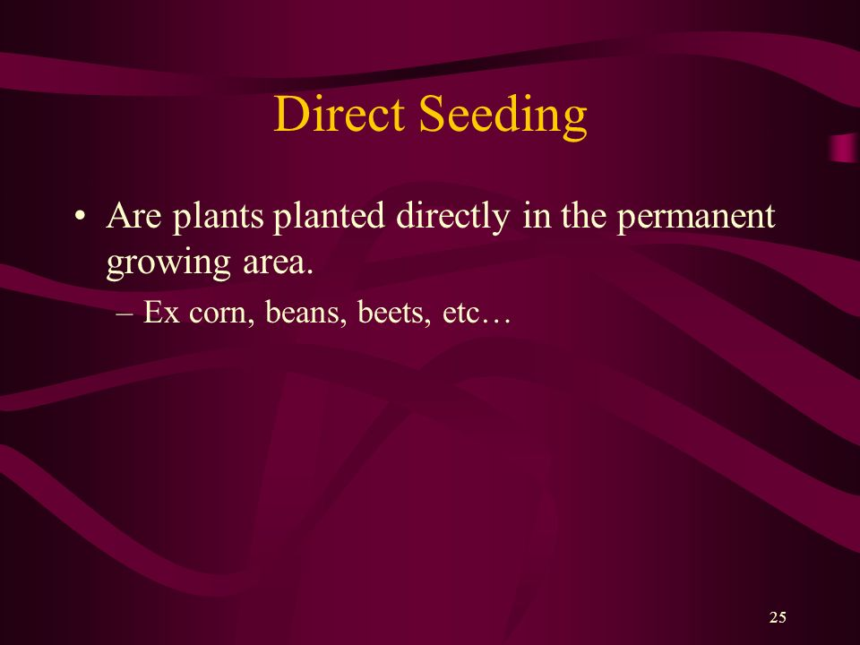 Direct Seeding Are plants planted directly in the permanent growing area.