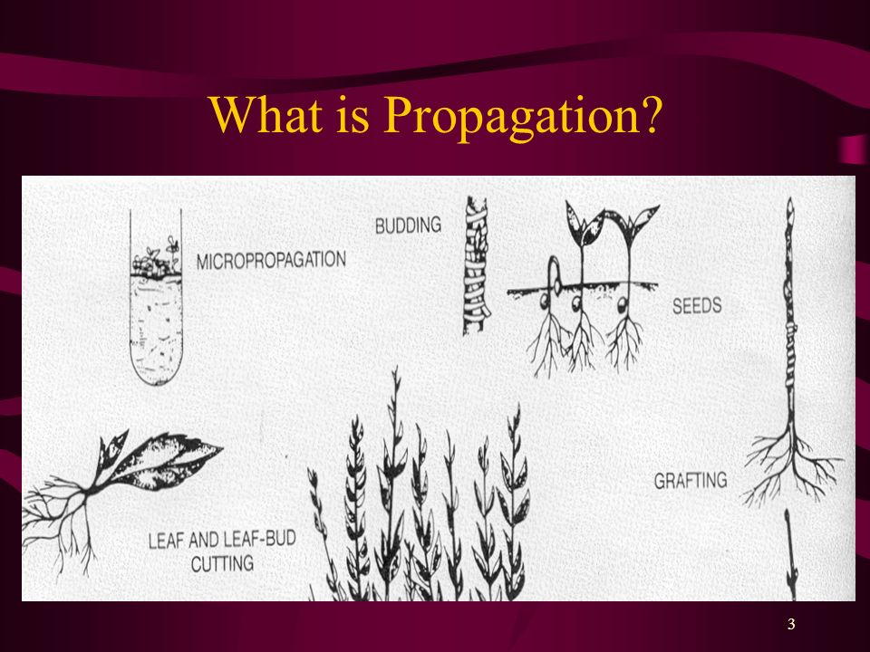 What is Propagation