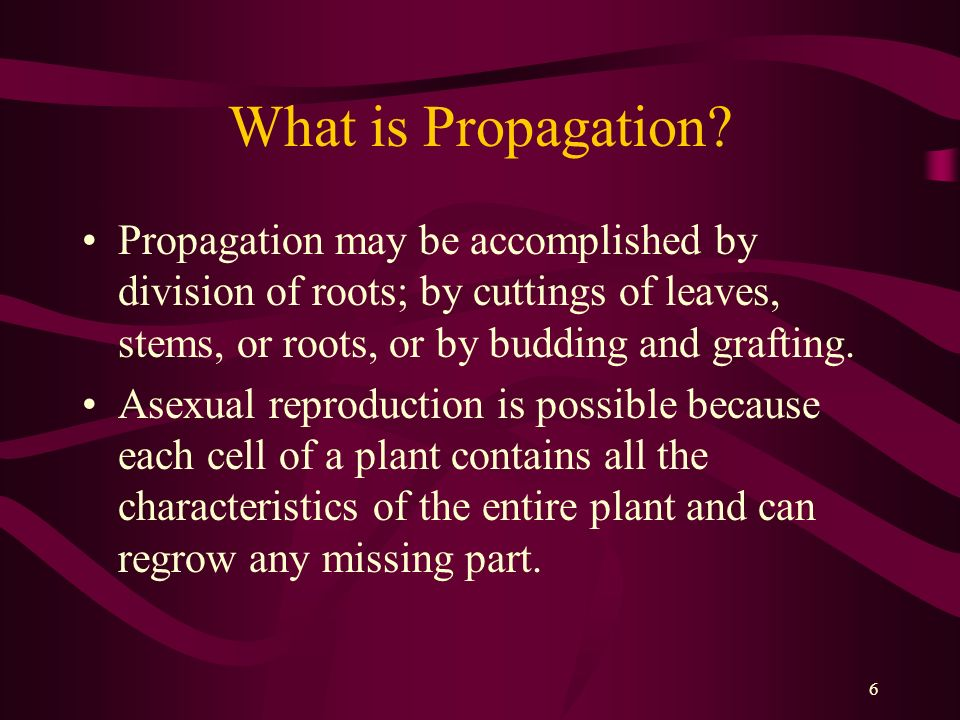 What is Propagation Propagation may be accomplished by division of roots; by cuttings of leaves, stems, or roots, or by budding and grafting.
