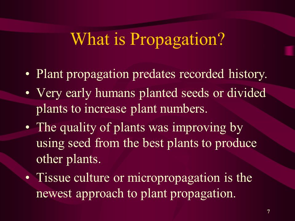 What is Propagation Plant propagation predates recorded history.