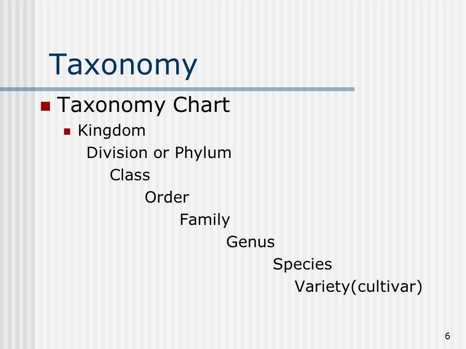 Taxonomy Taxonomy Chart Kingdom Division or Phylum Class Order Family