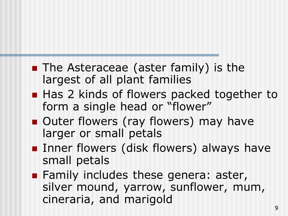 The Asteraceae (aster family) is the largest of all plant families