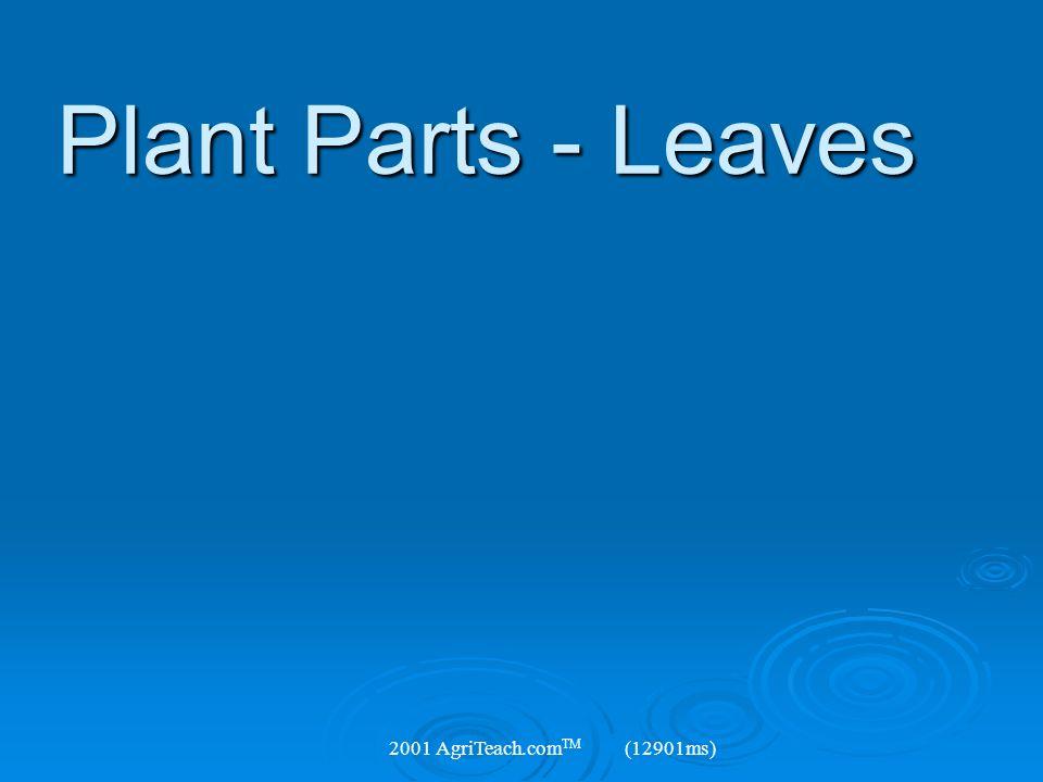 Plant Parts - Leaves 2001 AgriTeach.comTM (12901ms)