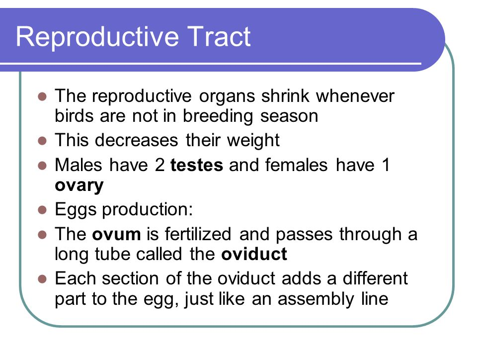 Reproductive Tract The reproductive organs shrink whenever birds are not in breeding season. This decreases their weight.