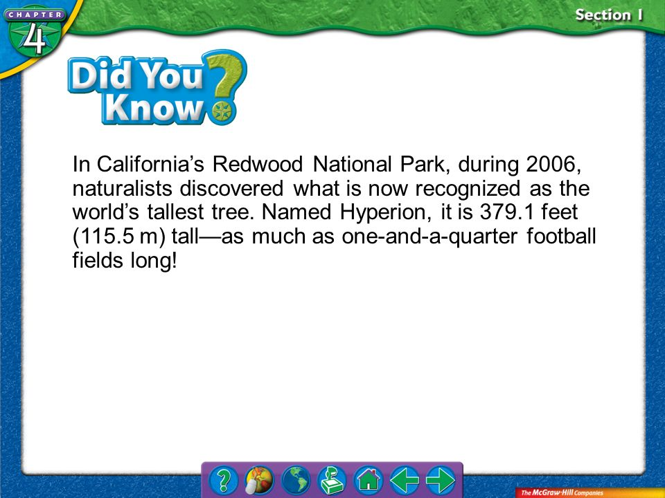 In California's Redwood National Park, during 2006, naturalists discovered what is now recognized as the world's tallest tree. Named Hyperion, it is 379.1 feet (115.5 m) tall—as much as one-and-a-quarter football fields long!