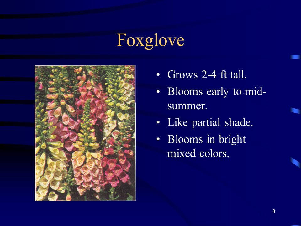 Foxglove Grows 2-4 ft tall. Blooms early to mid-summer.