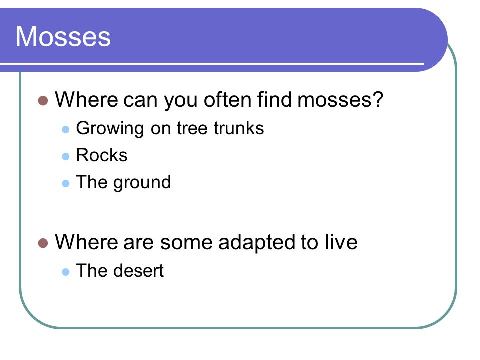 Mosses Where can you often find mosses Where are some adapted to live
