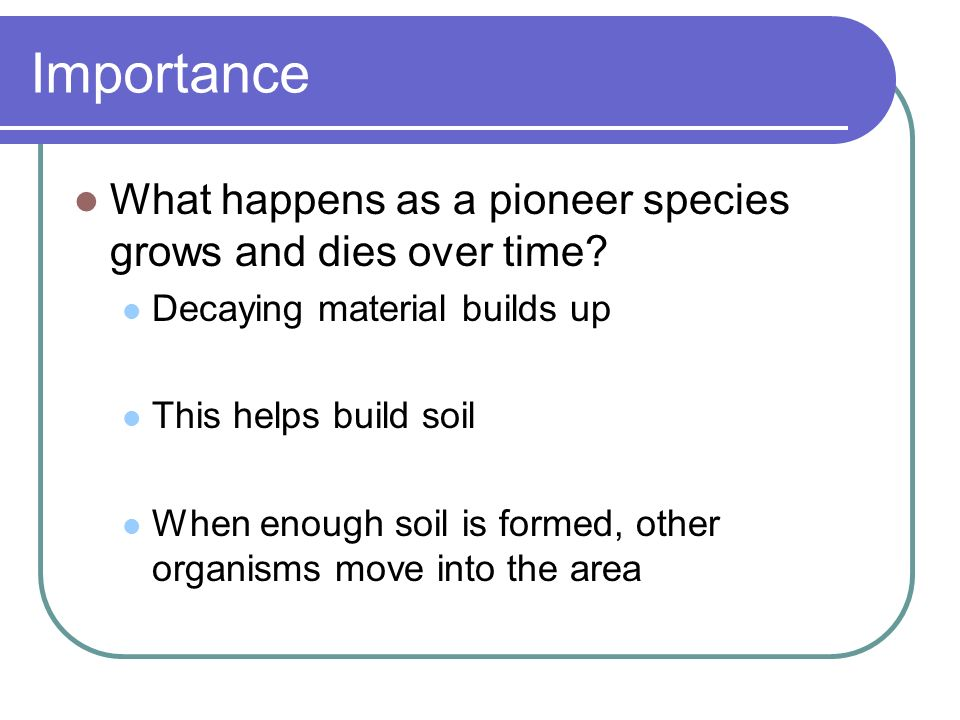 Importance What happens as a pioneer species grows and dies over time