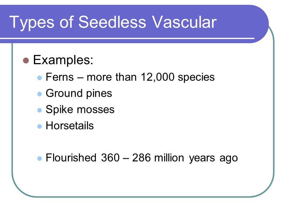 Types of Seedless Vascular