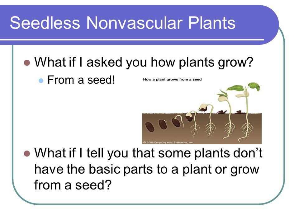 Seedless Nonvascular Plants