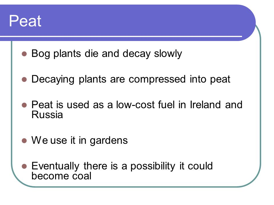 Peat Bog plants die and decay slowly