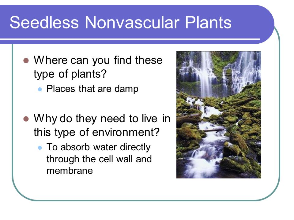 Seedless Nonvascular Plants