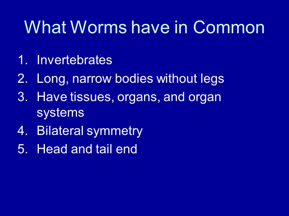 What Worms have in Common