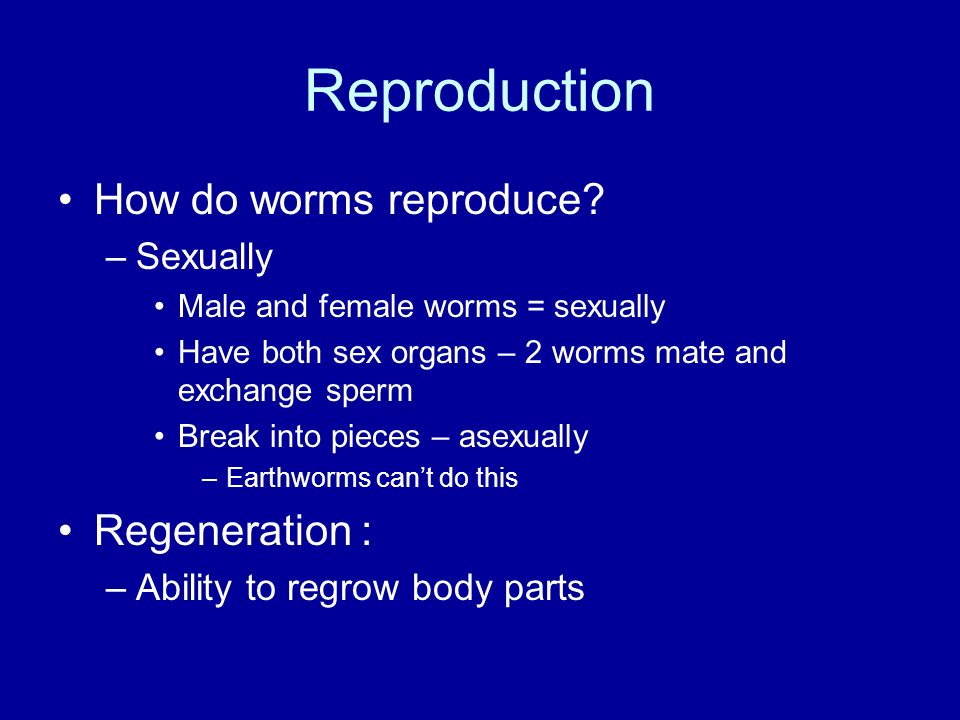 Reproduction How do worms reproduce Regeneration : Sexually