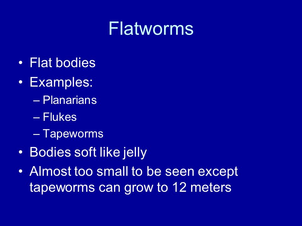 Flatworms Flat bodies Examples: Bodies soft like jelly