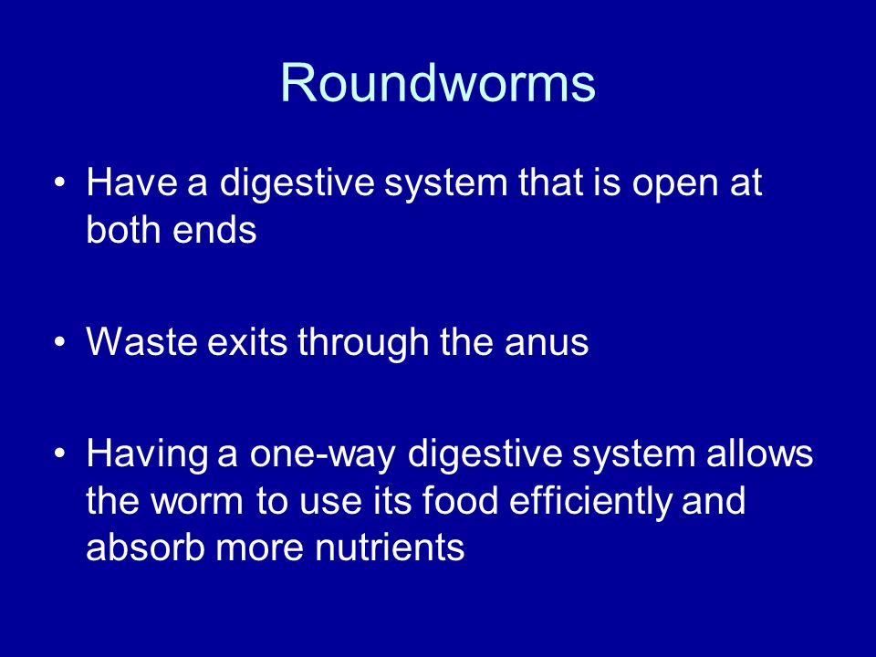 Roundworms Have a digestive system that is open at both ends