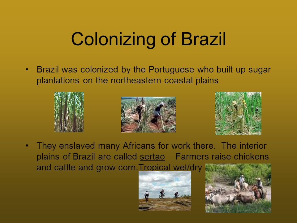 Colonizing of Brazil Brazil was colonized by the Portuguese who built up sugar plantations on the northeastern coastal plains.
