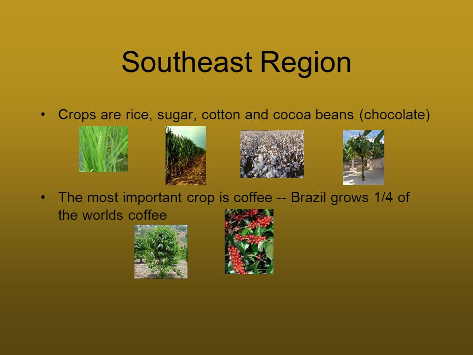 Southeast Region Crops are rice, sugar, cotton and cocoa beans (chocolate)