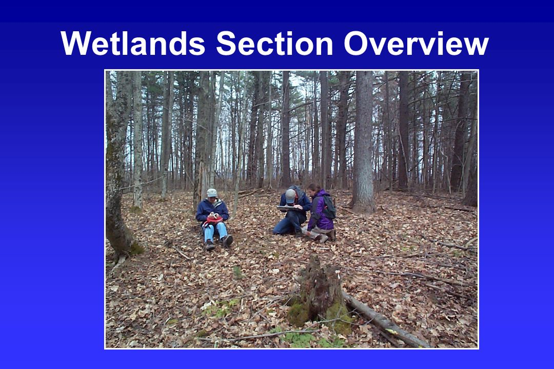 Wetlands Section Overview