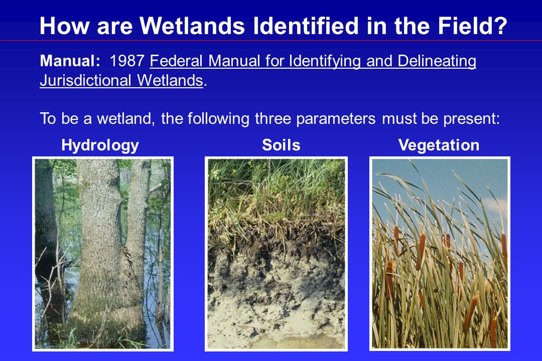 How are Wetlands Identified in the Field