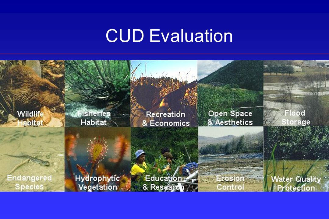 CUD Evaluation