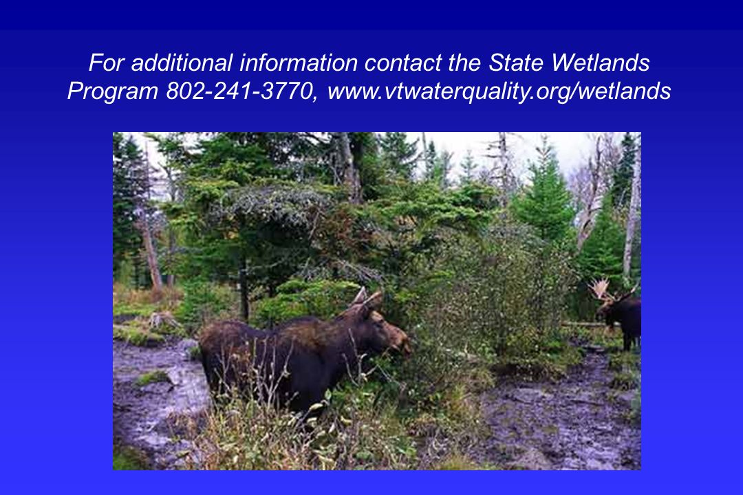 For additional information contact the State Wetlands Program 802-241-3770, www.vtwaterquality.org/wetlands