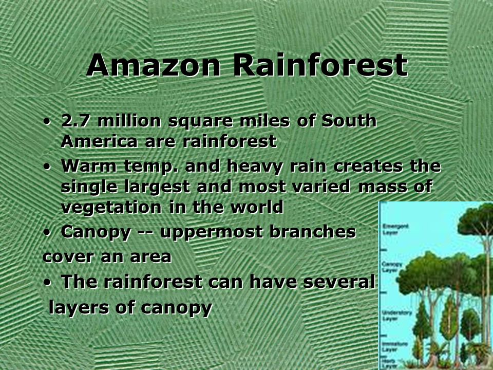 Amazon Rainforest The rainforest can have several layers of canopy