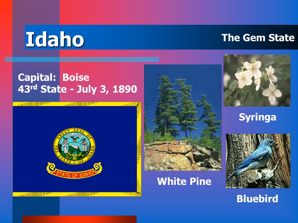 Idaho The Gem State Capital: Boise 43rd State - July 3, 1890 Syringa