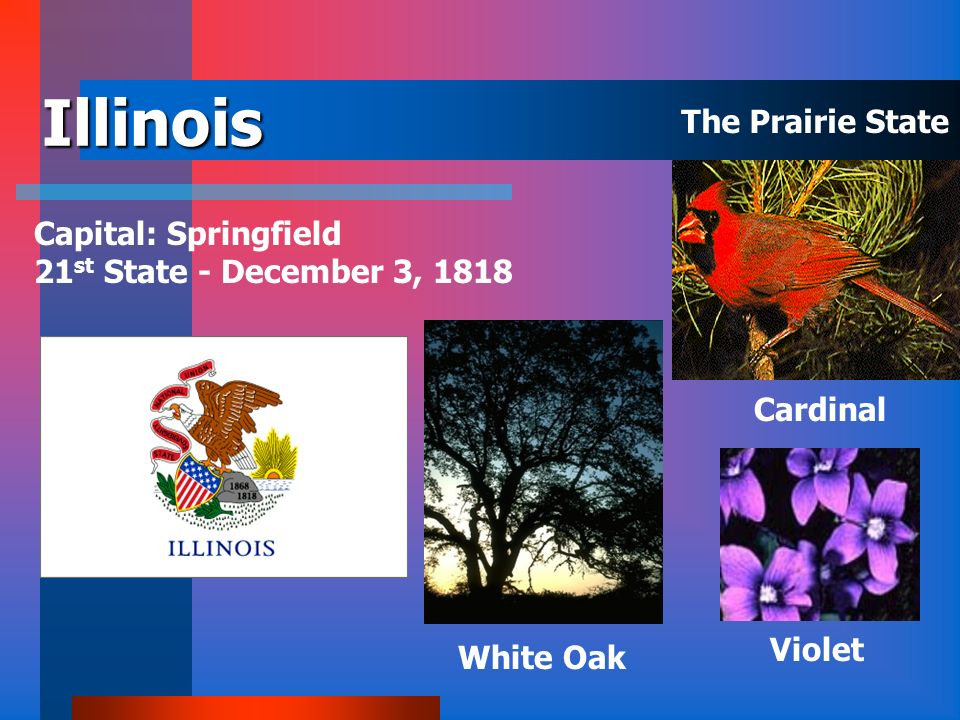 Illinois The Prairie State Capital: Springfield