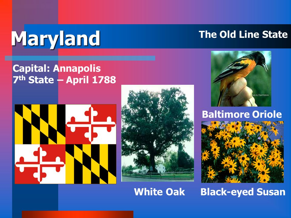 Maryland The Old Line State Capital: Annapolis 7th State – April 1788