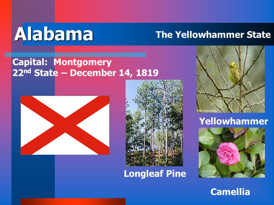 Alabama The Yellowhammer State Capital: Montgomery