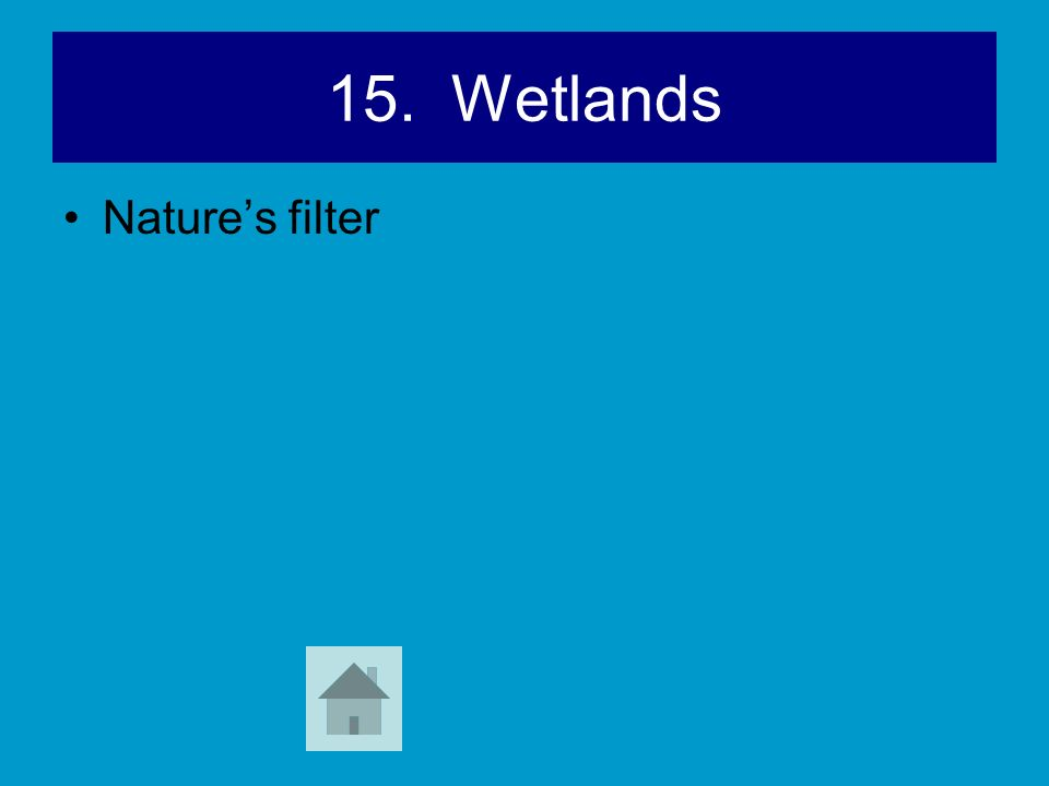 15. Wetlands Nature's filter