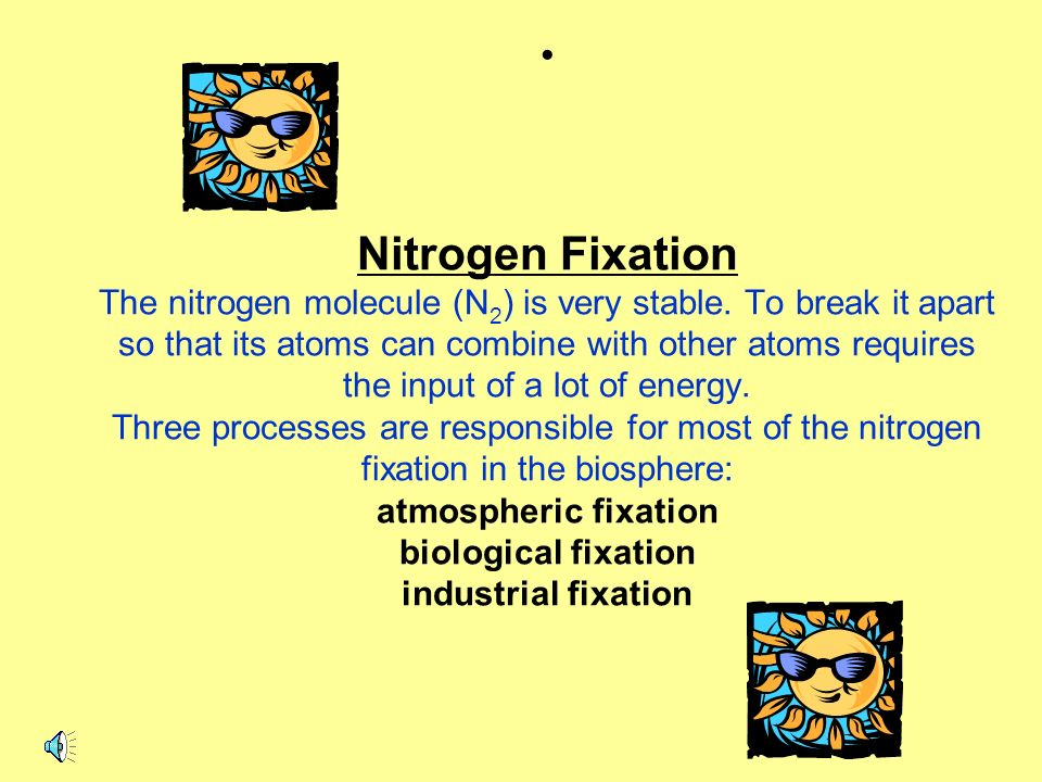 Nitrogen Fixation The nitrogen molecule (N2) is very stable
