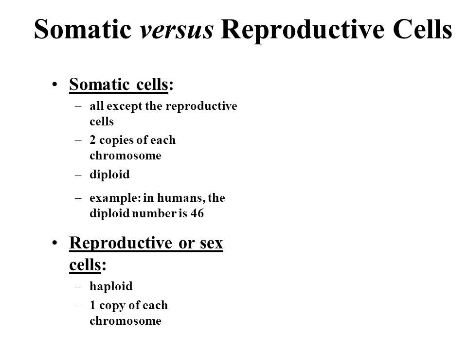 Somatic versus Reproductive Cells