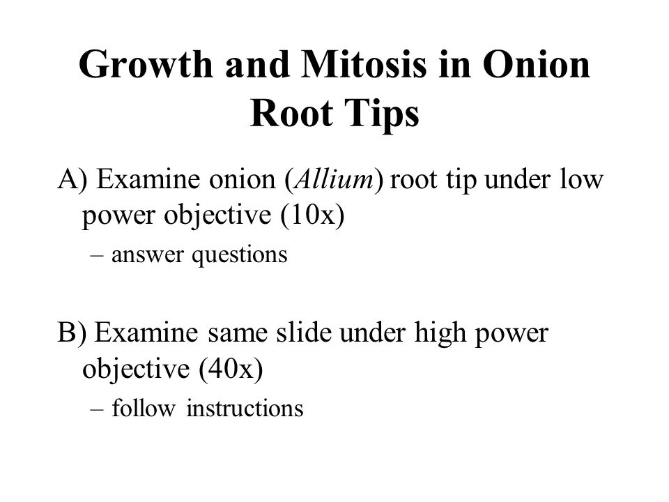 Growth and Mitosis in Onion Root Tips