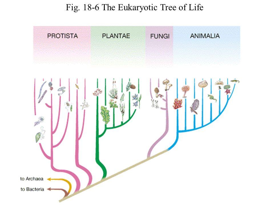 Fig. 18-6 The Eukaryotic Tree of Life