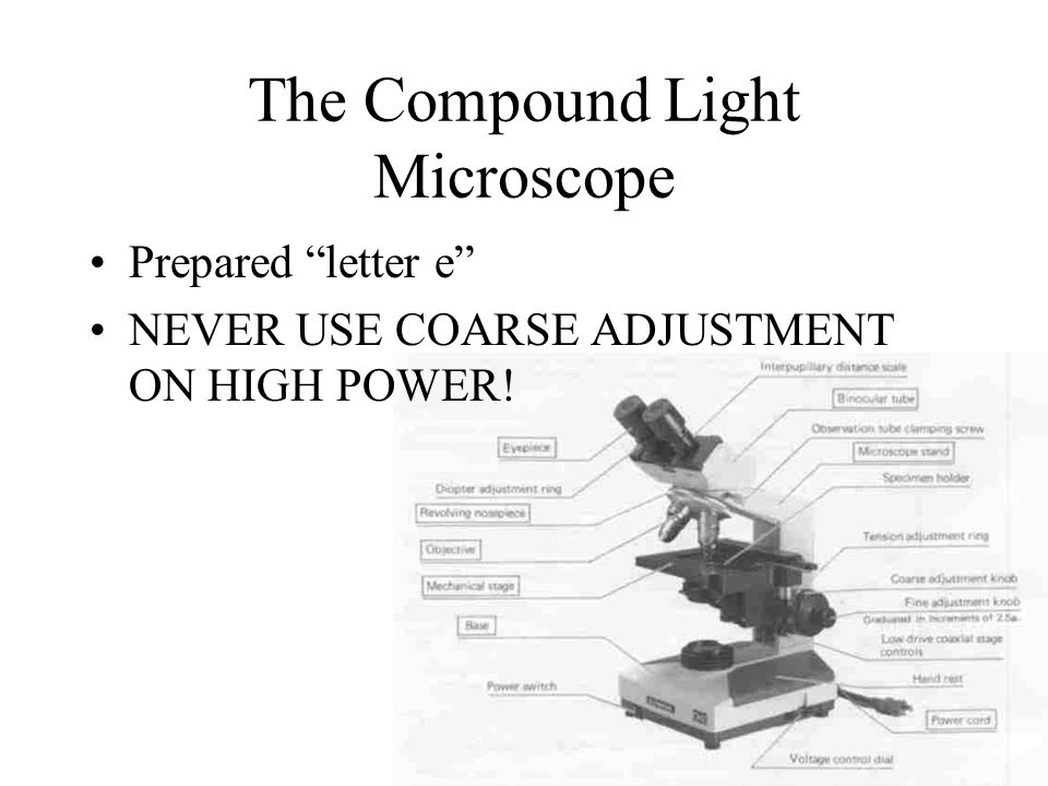 The Compound Light Microscope