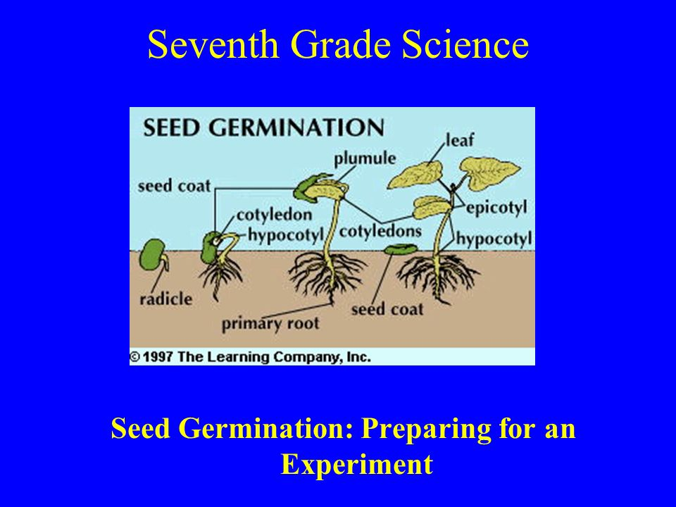 Seed Germination: Preparing for an Experiment
