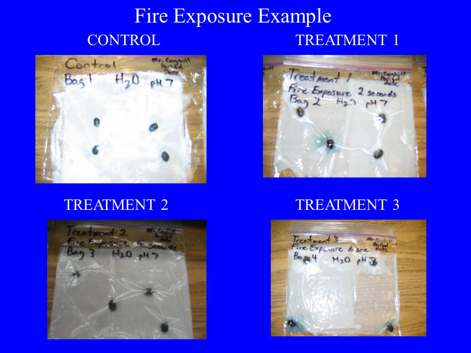 Fire Exposure Example CONTROL TREATMENT 1 TREATMENT 2 TREATMENT 3