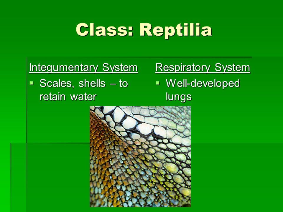 The Vertebrates Phylum: Chordata Subphylum: Vertebrata ...