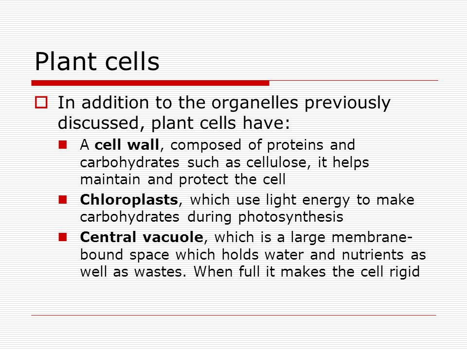 Plant cells In addition to the organelles previously discussed, plant cells have: