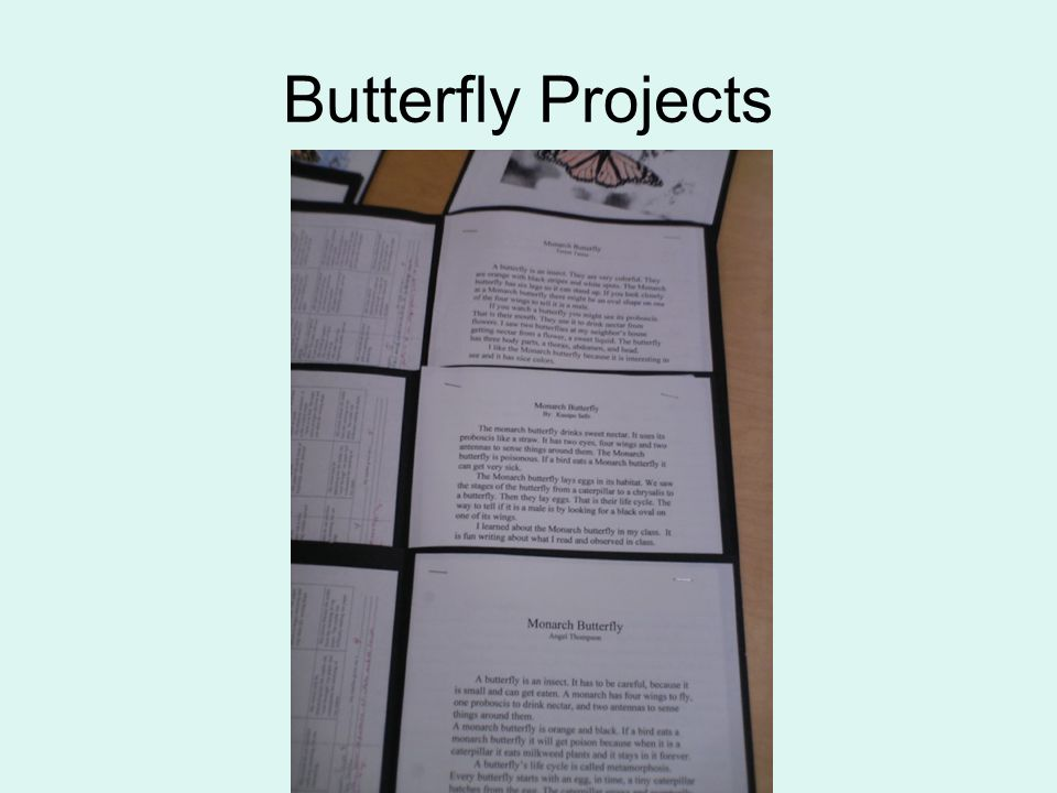 Butterfly Projects