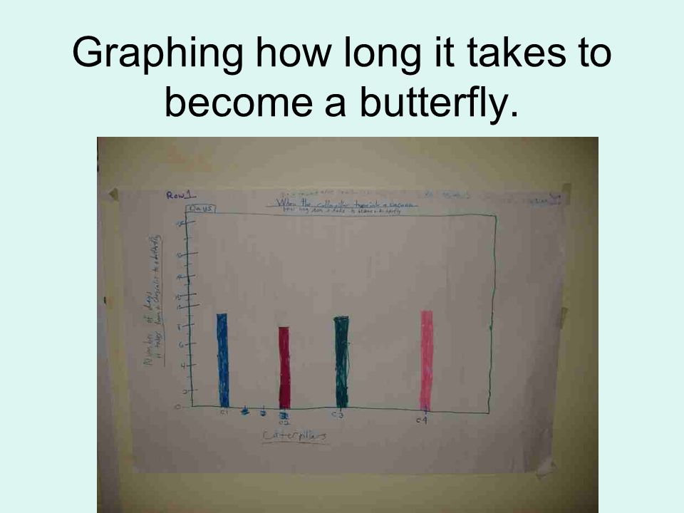 Graphing how long it takes to become a butterfly.