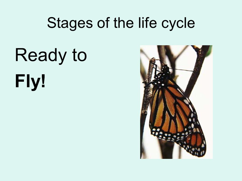 Stages of the life cycle