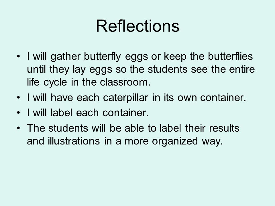 Reflections I will gather butterfly eggs or keep the butterflies until they lay eggs so the students see the entire life cycle in the classroom.